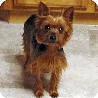 Adopt A Pet :: Texas Rosie - Yakima, WA