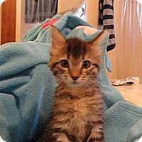 Adopt A Pet :: Stephie - Phoenix, AZ
