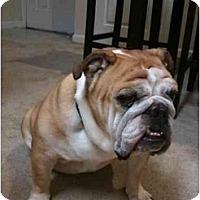 Adopt A Pet :: Cookie - Winder, GA