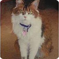 Adopt A Pet :: Madison - Staten Island, NY