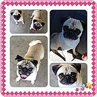 Adopt A Pet :: Millie Mae and Bella Boo - Eagle, ID