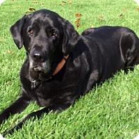 Adopt A Pet :: Franklin - Hadley, MI