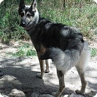 Adopt A Pet :: JENNA - SAN ANTONIO, TX