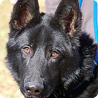 Adopt A Pet :: Hondo AD 03-04-17 - Preston, CT