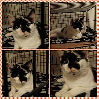 Adopt A Pet :: Precious Momma - Coshocton, OH