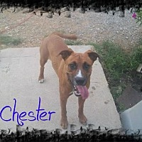 Boxer Dog for adoption in Crandall, Georgia - Chester