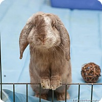 Adopt A Pet :: Riley - Newtown Square, PA