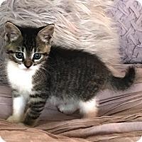 Adopt A Pet :: Coconut - Orange, CA