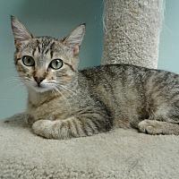 Adopt A Pet :: Topsy - Lake Charles, LA