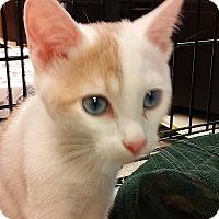 Adopt A Pet :: Mandarin - Yorba Linda, CA