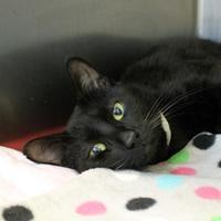 Adopt A Pet :: Zoot - Richmond, VA