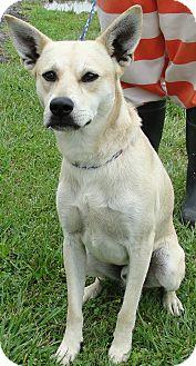 Australian Cattle Dog Mix Dog for adoption in Washington Court House, Ohio - Marvin