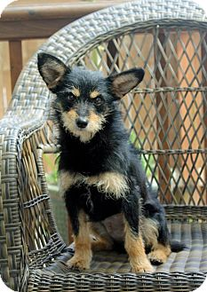 Terrier (Unknown Type, Medium) Mix Dog for adoption in Salem, Oregon - Blake