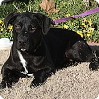 Adopt A Pet :: Hannah - PENDING, in Maine - kennebunkport, ME