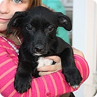 Adopt A Pet :: Artie - Foster Needed - kennebunkport, ME
