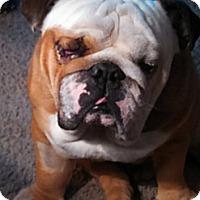 Adopt A Pet :: Bentley - Decatur, IL