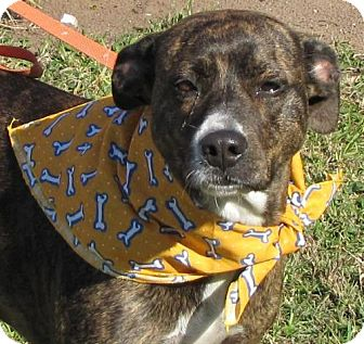 Terrier (Unknown Type, Medium) Mix Dog for adoption in Port St. Joe, Florida - Fantasia