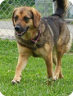 German Shepherd Dog/Beagle Mix Dog for adoption in Lisbon, Ohio - Flower
