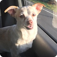 Adopt A Pet :: Zeus - Russellville, KY