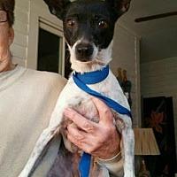 Adopt A Pet :: Molly - Evans, GA