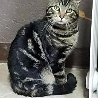 Adopt A Pet :: Sherlock PENDING ADOPTION - Seaford, DE
