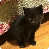 Adopt A Pet :: Nimbus - River Edge, NJ