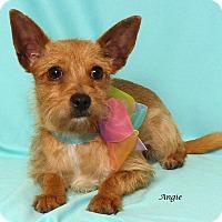 Adopt A Pet :: Angie - Kerrville, TX
