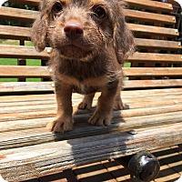 Adopt A Pet :: Leon (RBF) - Washington, DC
