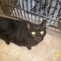 Adopt A Pet :: Biggie - Huntingdon, PA