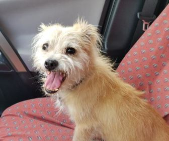 Terrier (Unknown Type, Small) Mix Dog for adoption in Heber City, Utah - Milly