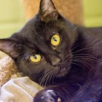 Adopt A Pet :: Crissy - Independence, MO