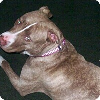 Adopt A Pet :: Knaaj (COURTESY POST) - Baltimore, MD