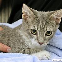 Adopt A Pet :: Morrie - Westchester, CA