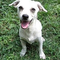 Adopt A Pet :: Wiggly is reduced! - Brattleboro, VT