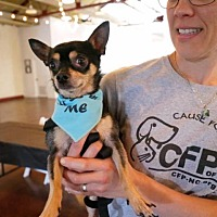 Adopt A Pet :: Duckie - Raleigh, NC