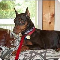 Adopt A Pet :: Maggie - Nashville, TN
