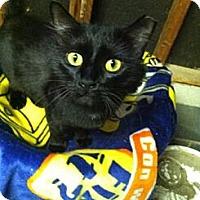 Adopt A Pet :: Luka - Riverhead, NY