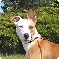 Adopt A Pet :: Hannah - Tumwater, WA