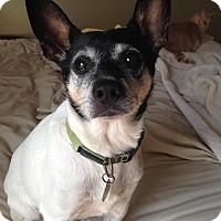Adopt A Pet :: Jericho - Marietta, GA