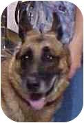 German Shepherd Dog Dog for adoption in Proctorville, Ohio, Ohio - Keegan