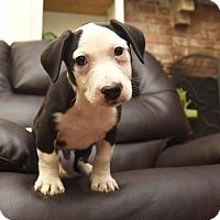 Adopt A Pet :: Rocky - Marietta, GA