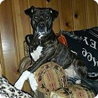 Adopt A Pet :: Runt Man-Courtesy Post - North Olmsted, OH