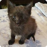 Adopt A Pet :: Toodles - Encinitas, CA