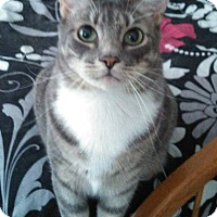 Adopt A Pet :: Baloo - Weatherford, TX