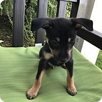 Adopt A Pet :: Poseidon - Tumwater, WA