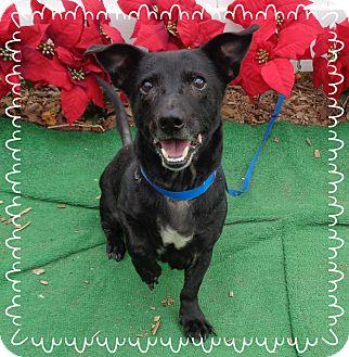 Dachshund Mix Dog for adoption in Marietta, Georgia - DOBEY - adopted @ off-site