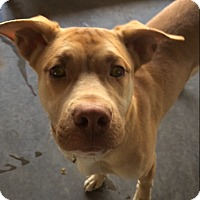 Adopt A Pet :: Zander in CT - Manchester, CT