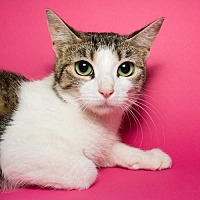 Adopt A Pet :: Fernanda - Jersey City, NJ