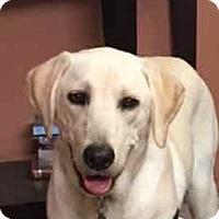 Adopt A Pet :: Bodie - San Francisco, CA