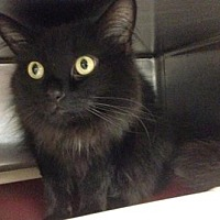 Adopt A Pet :: Storm Cloud - Anderson, IN